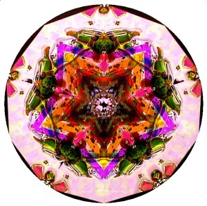 Kaleidoscopes by Marc Tickle